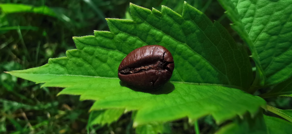 The effect of coffee on the climate